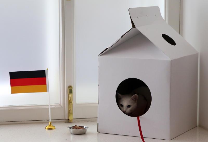 Кот-предсказатель Ахилл предрек победу Германии на Кубке конфедераций