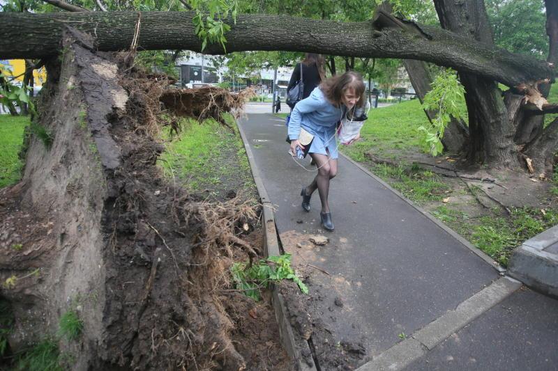 Последствия урагана в Москве ликвидировали