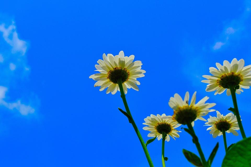 Цветочные клумбы представят в Троицке на конкурс цветников