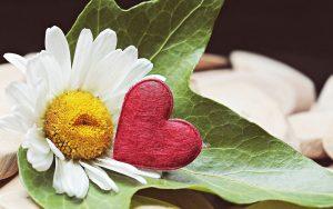 Все желающие смогут раскрыть свои семейные традиции, поучаствовать в конкурсах и погадать на ромашке. Фото: pixabay.com
