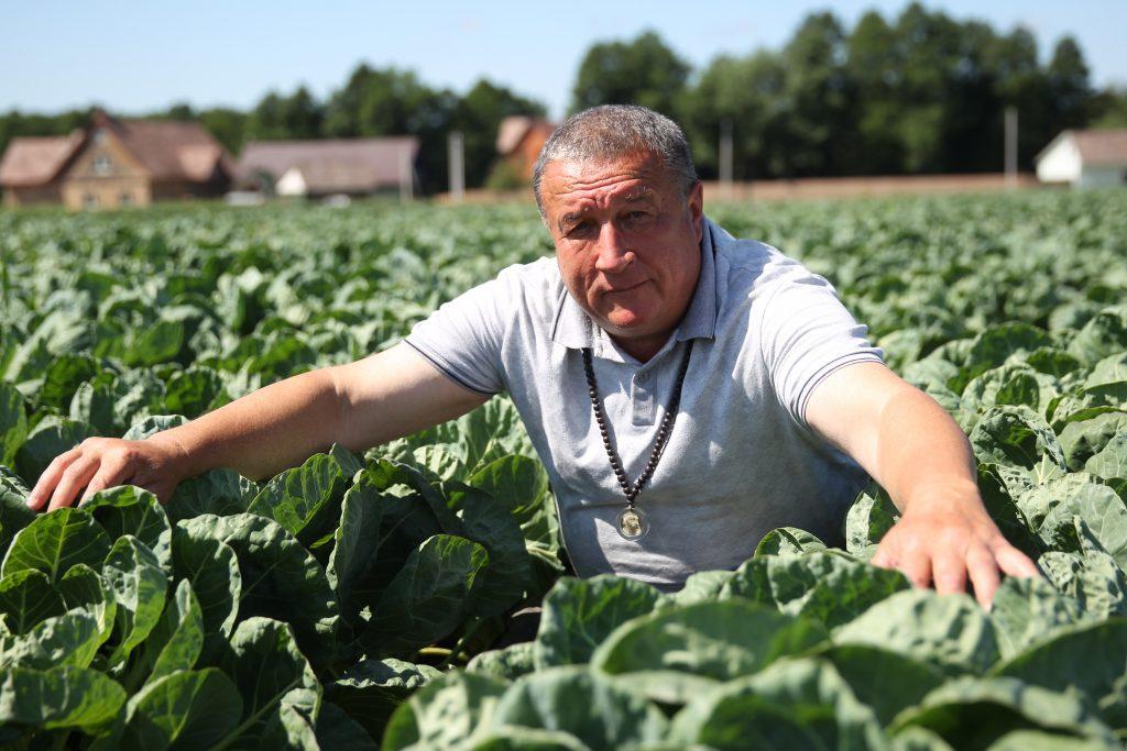 Капустное царство фермера