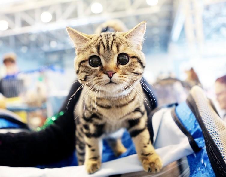 Книжная выставка к Международному дню кошек откроется в Роговском