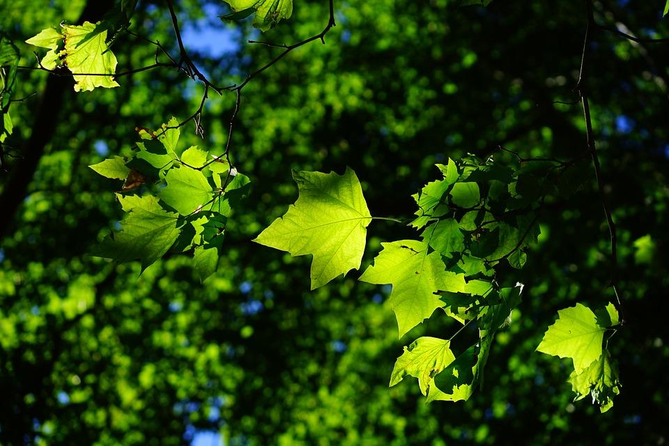 Работы по озеленению начнут в Кокошкино в сентябре