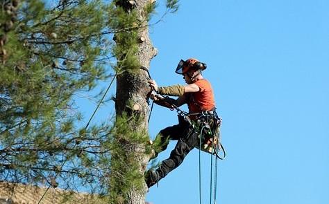 Санитарная обрезка деревьев началась на территории Десеновского