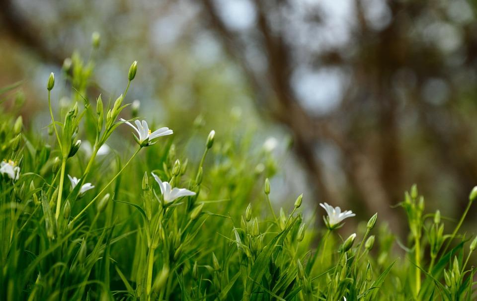Четыре тысячи «квадратов» газона застелют в Воскресенском