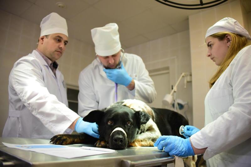 Ветеринарное обеспечение наладили в Новой Москве