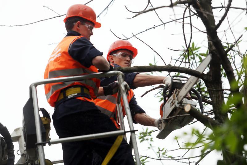 Работы по удалению сухих деревьев завершаются во Внуковском