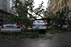 ЦОДД предупредил автомобилистов в Москве о сильном ветре