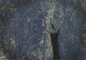 20 сентября 2017 года. Окрестности Зи- менки. В последние теплые дни перед зимой еще можно увидеть серую цаплю. Фото: Виктор Хабаров