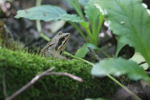 услышать лягушек. Фото: Виктор Хабаров