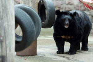 Гости Московского зоопарка увидят кормление медведей и шакалов