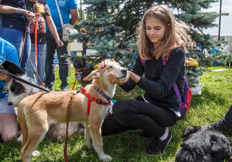 Юные пациенты центра «Ягодка» поиграют с дрессированными собаками