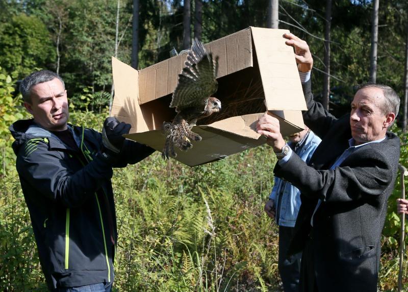 Животные вернутся в естественную среду обитания в Новой Москве