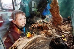 Детский зоопарк реконструируют в центре Москвы