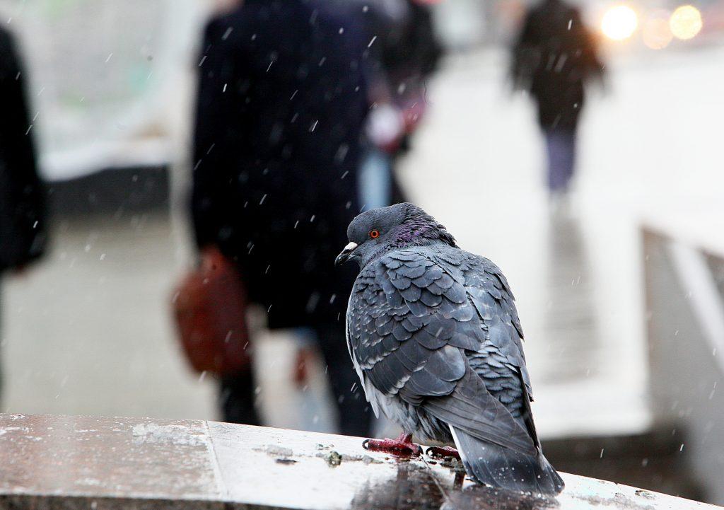 На выходных в Москву придут холода и снег