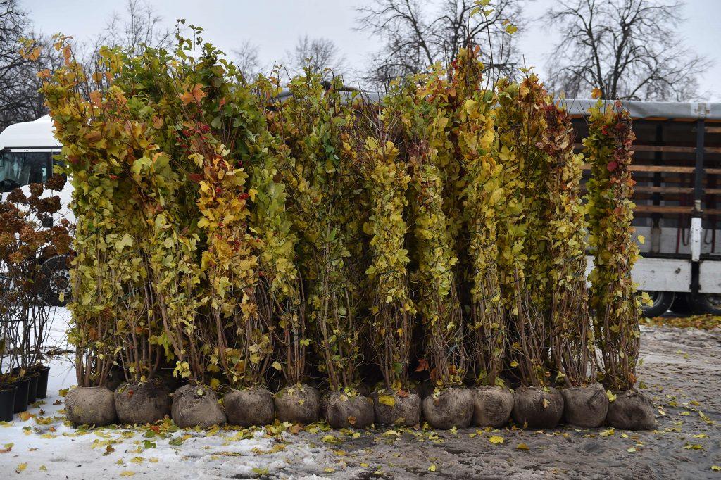 Озеленение по программе «Миллион деревьев» вступило в осенний этап