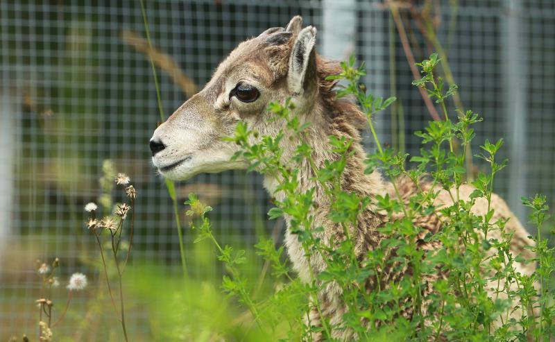 Международный день животных отметят в Щербинке