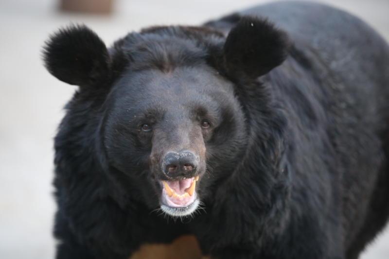 Вакцинация диких животных против бешенства стартовала в Новой Москве