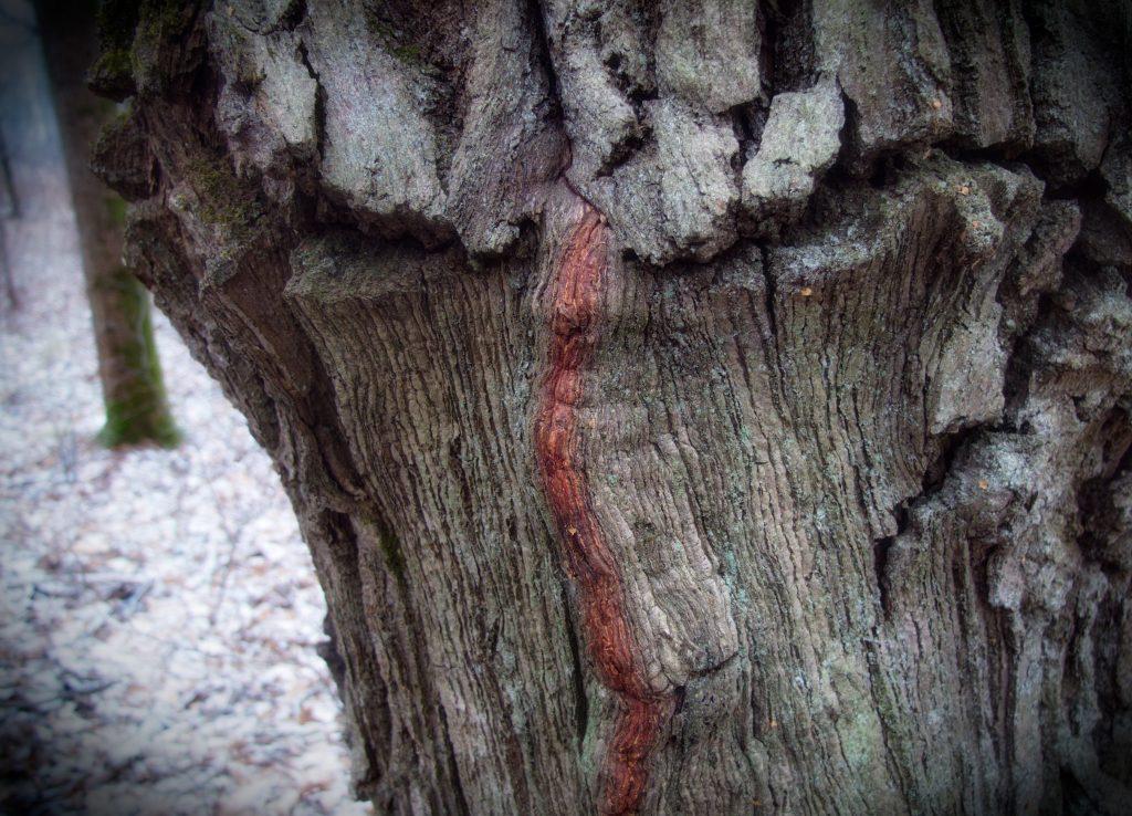 «Дух дерева». Фото: Виктор Хабаров