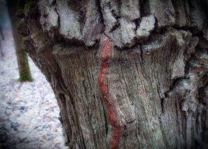 «Дух дерева». Фото: Алексей Захаринский