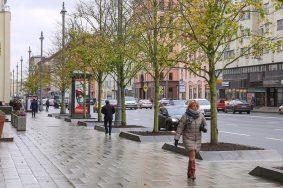 Липовую аллею воссоздали в центре Москвы