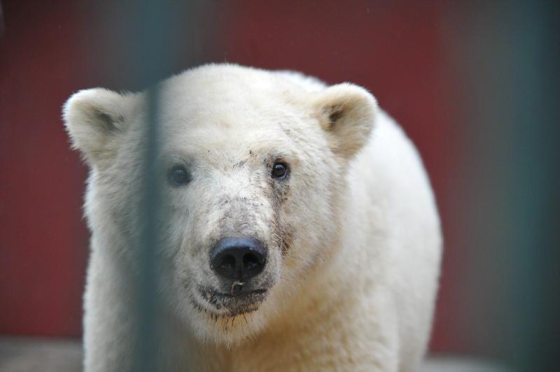 Московский зоопарк перейдет на зимний режим работы с 23 ноября