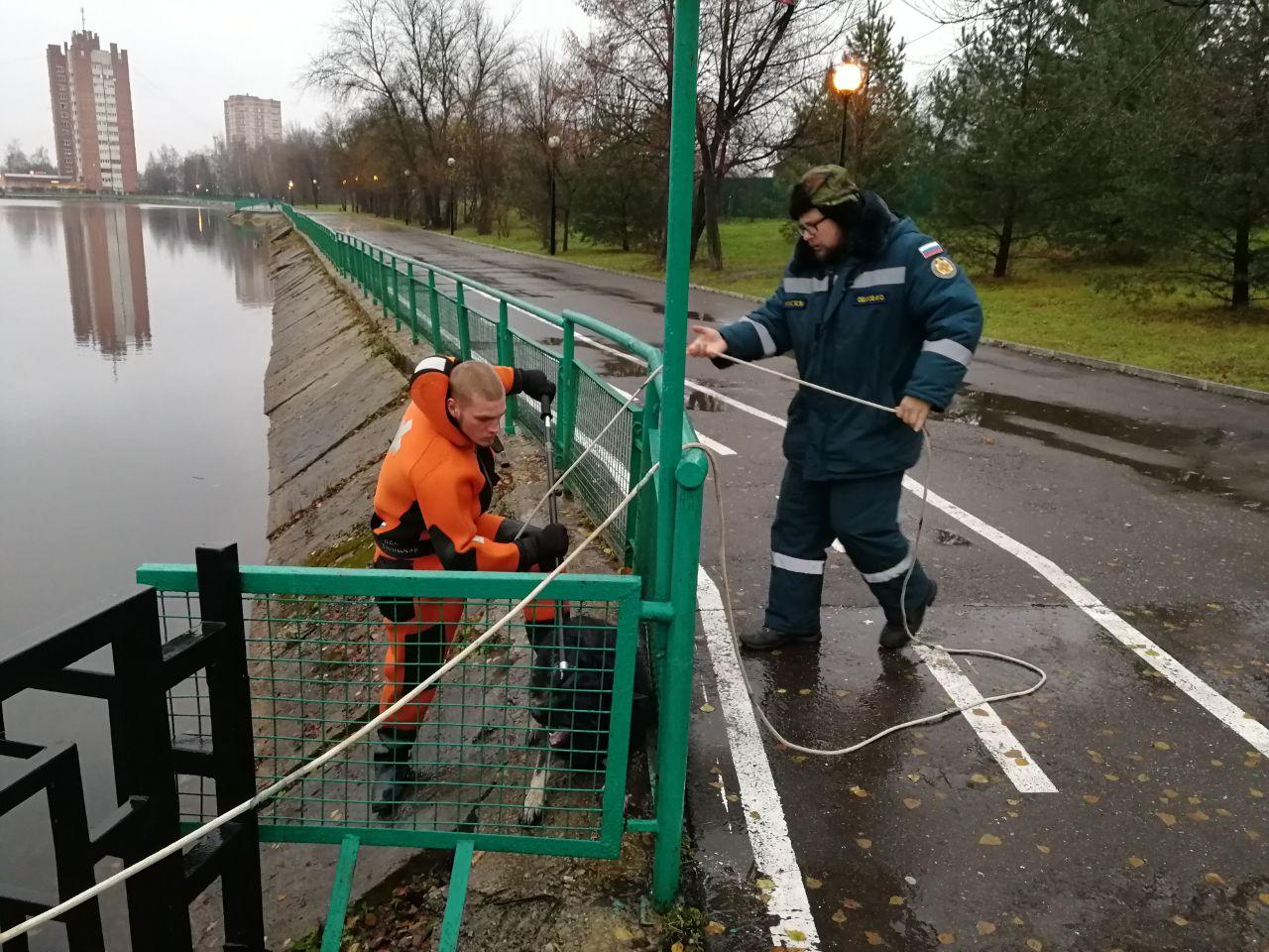 Специалисты поисково-спасательной станции «Троицкая» вытащили из воды тонущую собаку