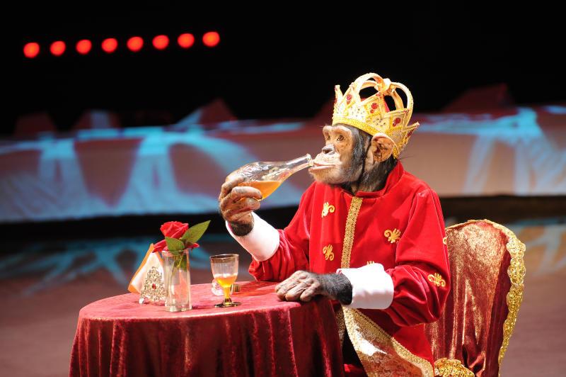 Цирк приехал к нам: какие развлечения ждут новомосквичей в выходные