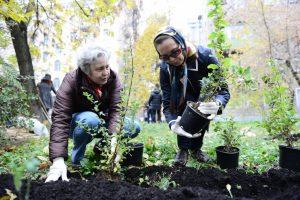 Территорию возле Дворца культуры Щербинки озеленят в 2018 году. Фото: архив
