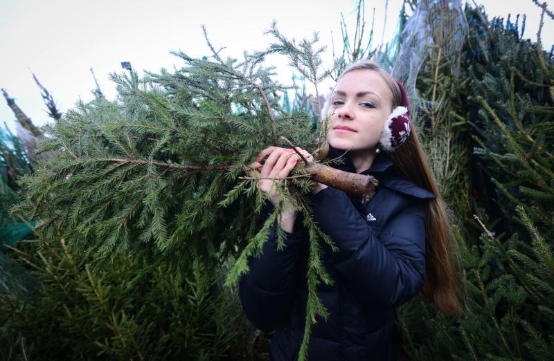 Восемь точек продажи праздничных деревьев откроют в Новой Москве