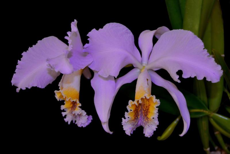Усадьба, где росли орхидеи
