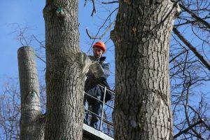 Санитарная обрезка деревьев завершилась в Рязановском. Фото: архив