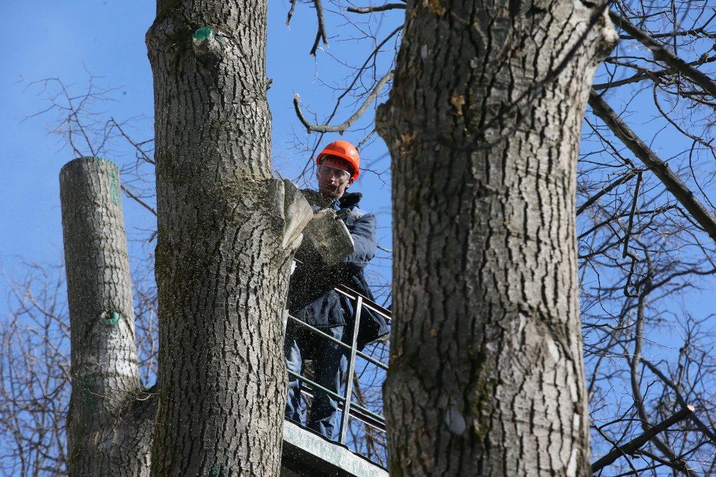 Санитарную обрезку деревьев провели в Рязановском
