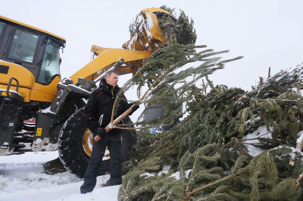 Пункт приема хвойных деревьев заработал в Роговском