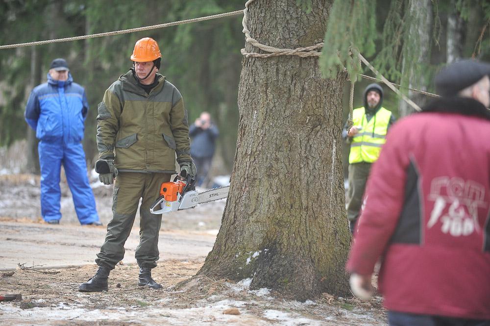 Сухостойные деревья вырубят во Внуковском