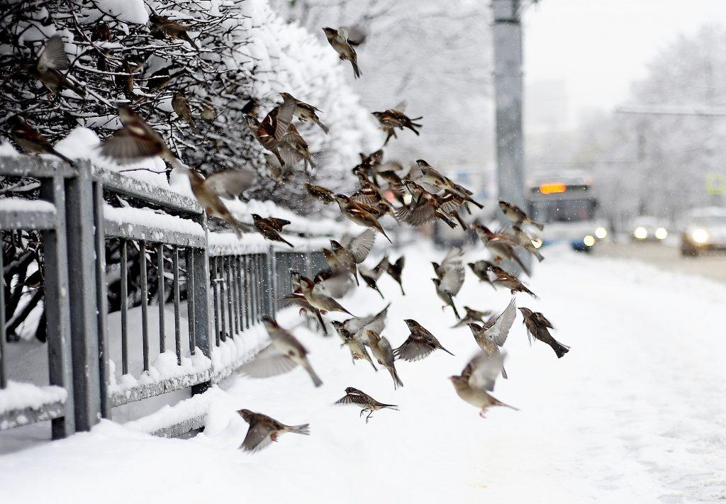 В пятницу на Москву вновь опустится оттепель