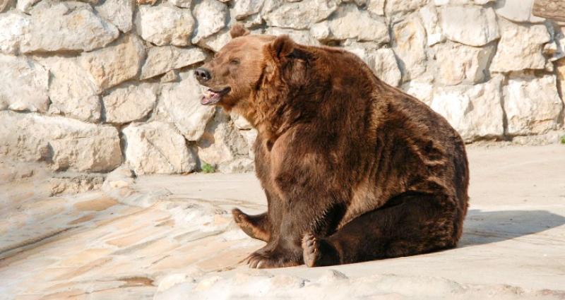 Зоопарк в Москве перейдет на новый режим работы
