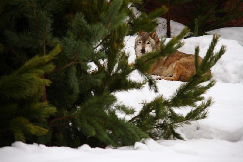 Бесплатные экскурсии и квесты пройдут в московском зоопарке 17-18 февраля