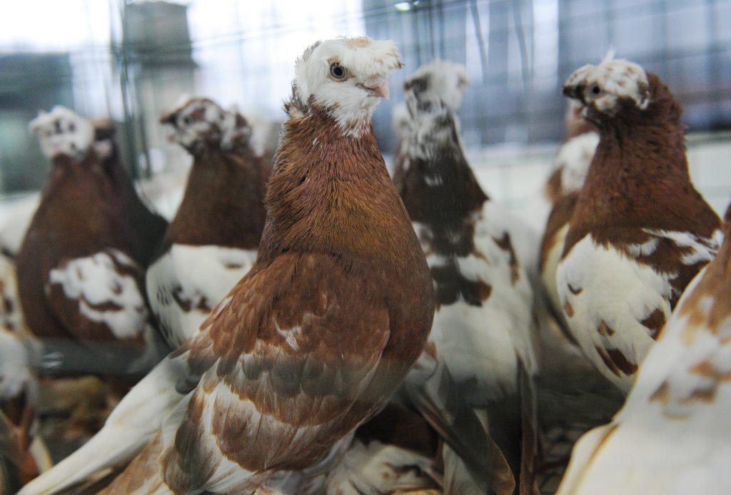 Кормите животных и птиц, это вас духовно развивает
