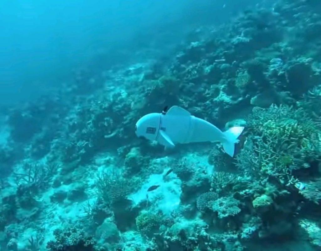 Ученые изобрели робота-рыбу для видеосъемок подводного мира