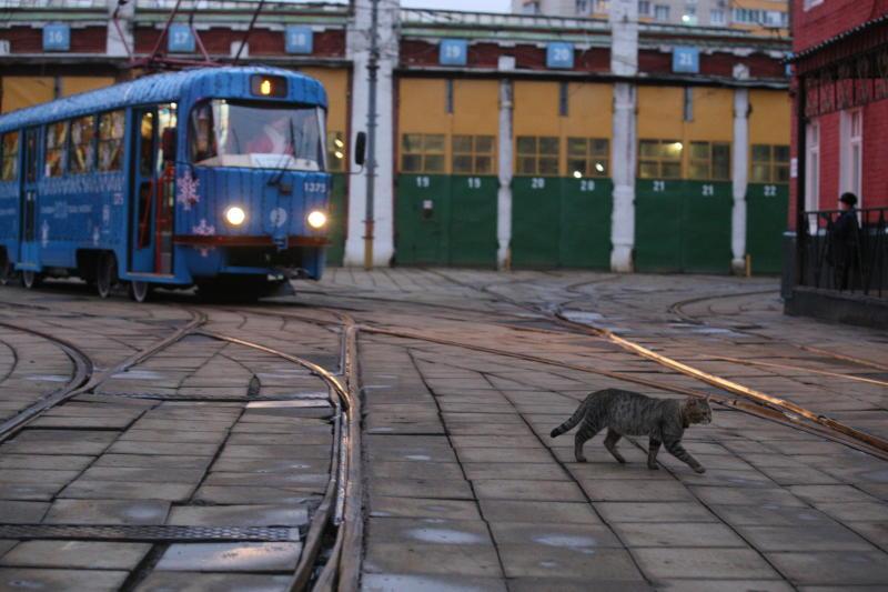Трамвайную линию проведут от автомобильной трассы до Троицка