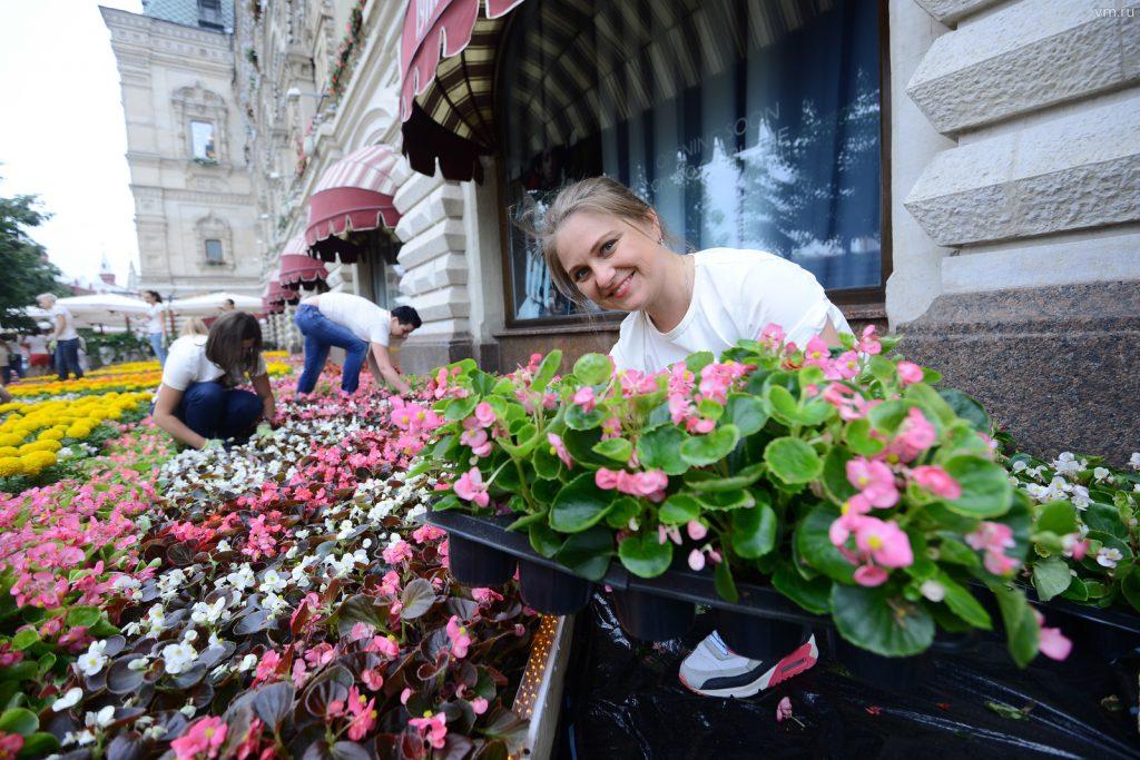 Почти 50 миллионов цветов украсят улицы столицы. Фото: Наталья Феоктистова, «Вечерняя Москва»