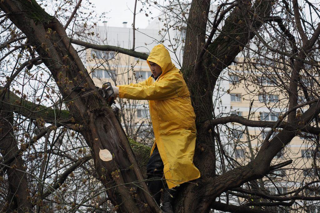 Разрушения после урагана: повалены почти 900 деревьев