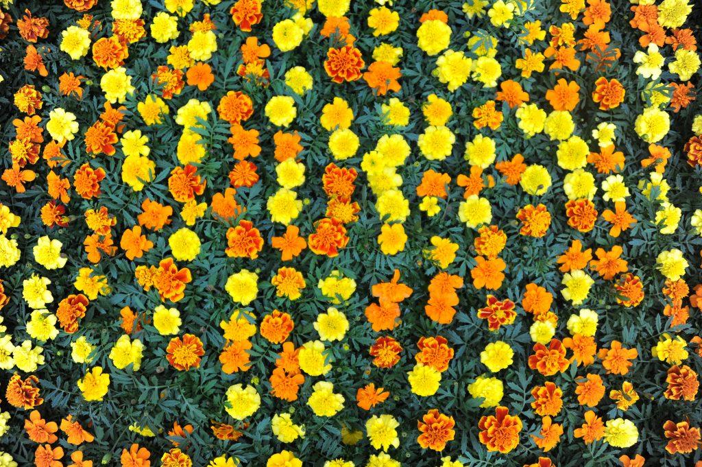 Новые цветы украсят поселение Рязановское