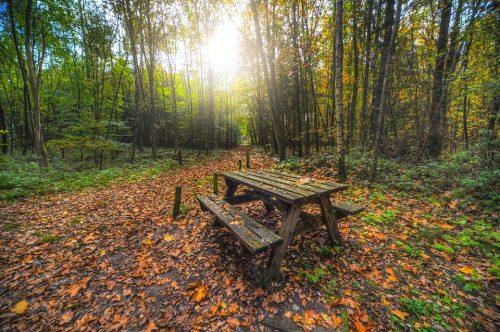 В Митинском лесопарке 14 площадок, а в парке «Тушинский» более 15. Фото: сайт pixabay