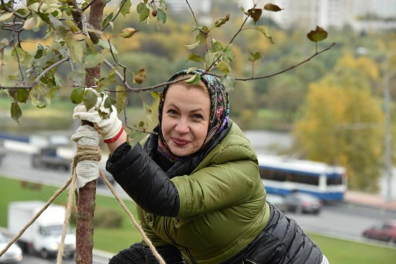 Деревья обрежут в Рязановском. Фото: Владимир Новиков, «Вечерняя Москва»