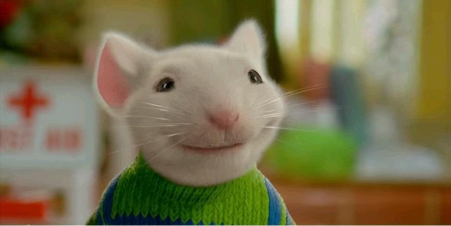 Ученые пересадили мышам человеческий мозг