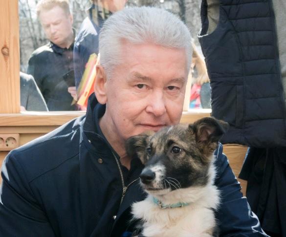Собянин взял из приюта брошенную собаку по кличке Джоуи