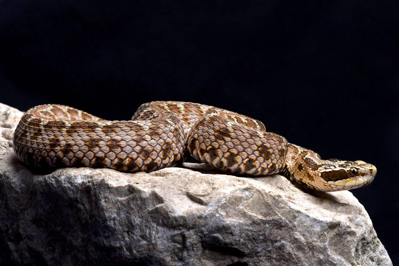 Змеи не так страшны, как считают горожане. Фото: Shutterstock
