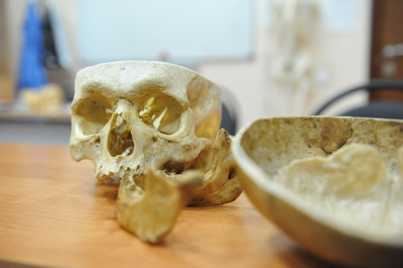 Ученые вырастят мозг неандертальцев. Фото: Александр Казаков
